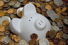 Rich Pig Royalty Free Stock Photo