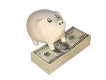 Rich a pig. Pigbox and 10000 dollars Royalty Free Stock Photography