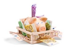Rich Piggy Bank Stock Photo