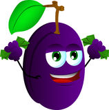 Rich plum Stock Photos