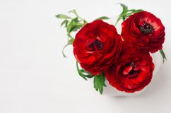 Rich red buttercup flowers in vase on soft white wooden table, top view. Elegance bouquet for modern interior. stock photos