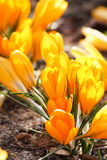 Rich spring flowers Royalty Free Stock Photos