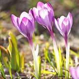 Rich spring flowers Stock Photography
