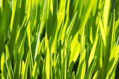 Rich spring green grass, suitable as a background image Stock Images