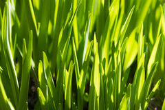 Rich spring green grass, suitable as a background image Stock Photo