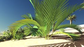 Rich tropical greenery on wasteland in the evening, 3d rendering Royalty Free Stock Photo