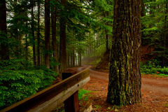 Rich Winding Forest Road Stock Photography