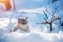 Richels in de diepe sneeuw in de winter stock afbeeldingen