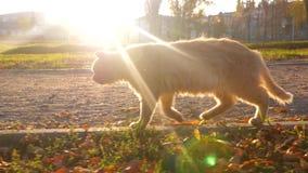 Richels door park in stralen van het plaatsen van zon huisdieren stock footage