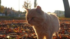 Richels door park in stralen van het plaatsen van zon huisdieren stock videobeelden
