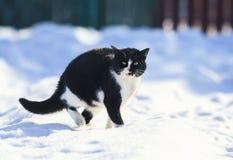 richels op pluizige sneeuw in de winterwerf en miauwen luid stock afbeeldingen