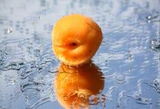 riches d'abricot Image libre de droits