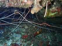 Riches de Sabah de beauté de diversité sous-marine, Bornéo images libres de droits