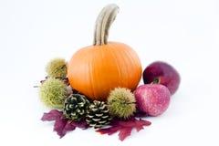 Richesse d'automne Photos stock