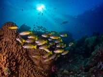 Free Richest Reefs In The World. Misool, Raja Ampat, Indonesia Royalty Free Stock Photos - 151394688