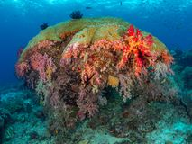 Richest reefs in the world. Misool, Raja Ampat, Indonesia. The reefs in the Misool Marine Protected Area within Raja Ampat, Indonesia, are the richest on earth stock image