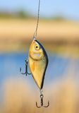 Richiamo di plastica di pesca (wobbler) Immagini Stock Libere da Diritti