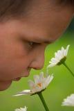 Richieda tempo godere dei fiori Immagini Stock