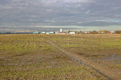 Richmond, BC Winter Farmland Royalty Free Stock Photo