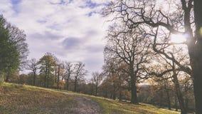 Richmond Park fotografia stock