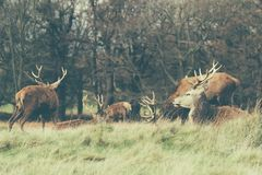 Richmond Park fotografie stock