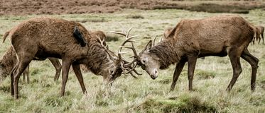 Richmond Park fotografia stock