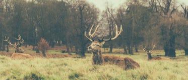 Richmond Park fotografie stock libere da diritti