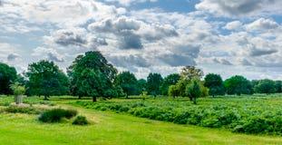 Richmond Park fotografia stock libera da diritti