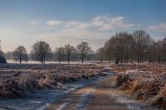 Richmond Park Royalty-vrije Stock Foto