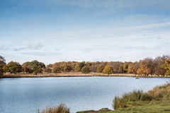 Richmond Park Royaltyfri Bild
