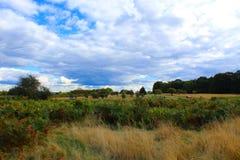 Richmond Park arkivfoton