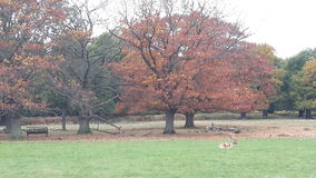 Richmond Park Stock Photos