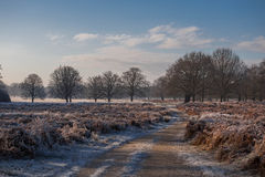 Richmond park. Early December, London Royalty Free Stock Photo