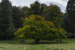 Richmond Park, grande Britan, il 14 ottobre 2017 fotografie stock