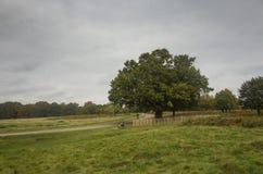 Richmond Park, grande Britan, il 14 ottobre 2017 fotografia stock libera da diritti