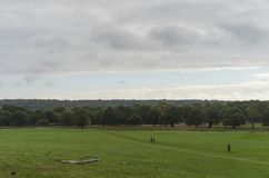Richmond Park, grande Britan, il 14 ottobre 2017 fotografie stock libere da diritti