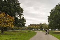 Richmond Park, grande Britan, il 14 ottobre 2017 immagine stock