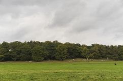 Richmond Park, grande Britan, il 14 ottobre 2017 immagine stock libera da diritti