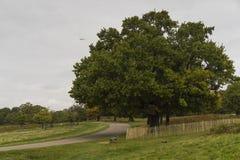 Richmond Park, grande Britan, o 14 de outubro de 2017 fotografia de stock