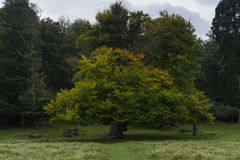 Richmond Park, großes Britan, am 14. Oktober 2017 Stockfotos