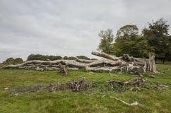 Richmond Park, großes Britan, am 14. Oktober 2017 Lizenzfreie Stockbilder
