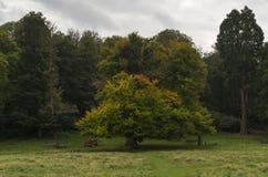 Richmond Park, großes Britan, am 14. Oktober 2017 Lizenzfreie Stockfotografie