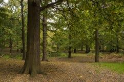 Richmond Park, großes Britan, am 14. Oktober 2017 Stockfoto