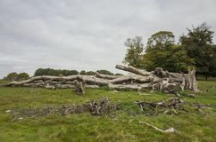 Richmond Park, Grote Britan, 14 Oktober 2017 Royalty-vrije Stock Afbeeldingen