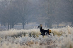 Richmond Park London Royalty-vrije Stock Foto's