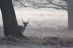 Richmond Park London Royalty-vrije Stock Afbeeldingen