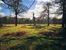 Richmond Park London, F?renade kungariket fotografering för bildbyråer