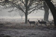 Richmond Park London Stock Photography