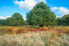 A park in fall colors Royalty Free Stock Photography