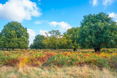 A park in fall colors, London  Royalty Free Stock Photo